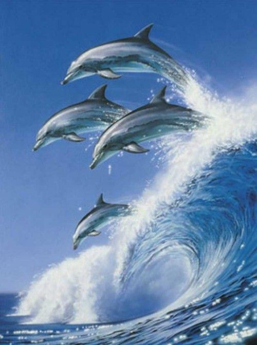 rencontre dauphin marineland avis Clichy